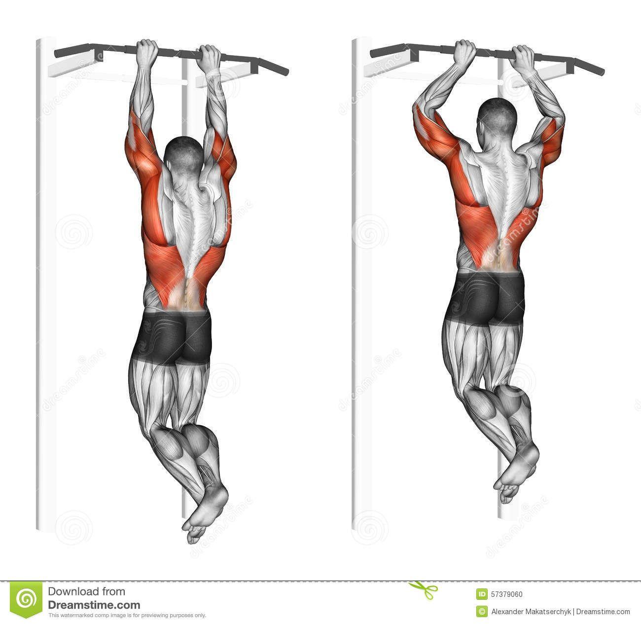exercising-pull-ups-brachialis-bodybuilding-target-muscles ...
