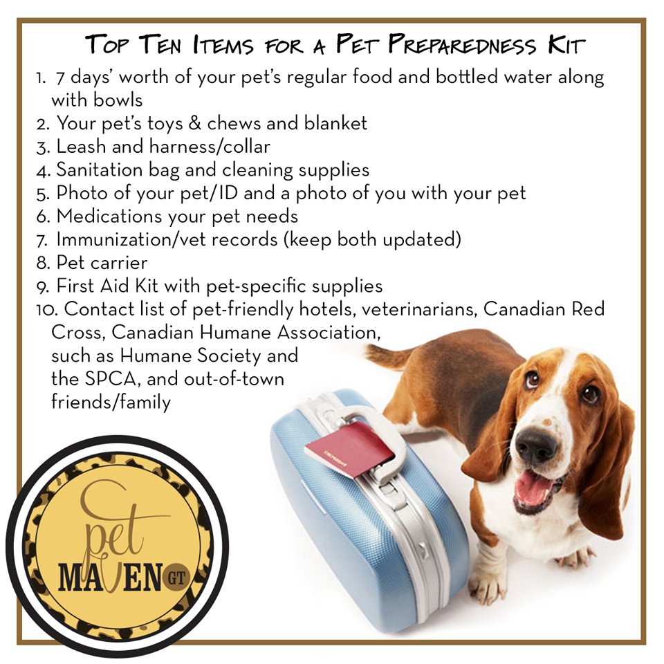 GT Pet Maven reminding you it is National Pet Preparedness