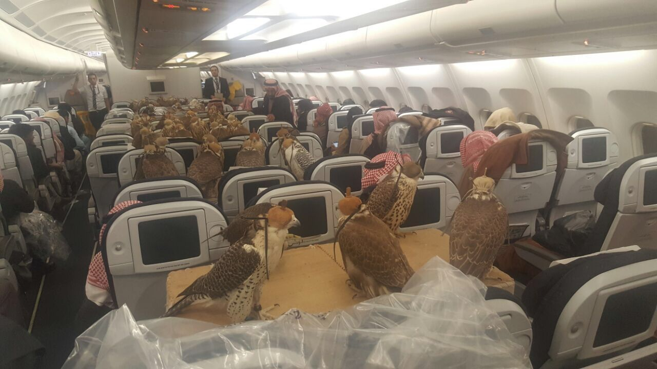 The Hunting Falcons Of The Middle East Can Fly But They Get Their Own Seats When They Take A Plane Birds Of Prey First Class Airline Birds