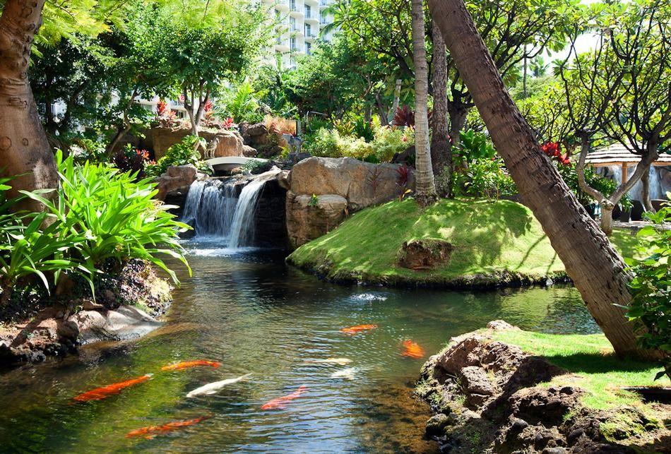 Koi pond and gardens maui koi estanques de jard n for Plantas para estanque peces koi