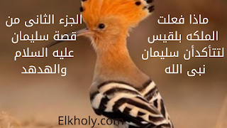 Pin By Ahmed Elkholy On أخبارك Ana Special Features Blog Posts