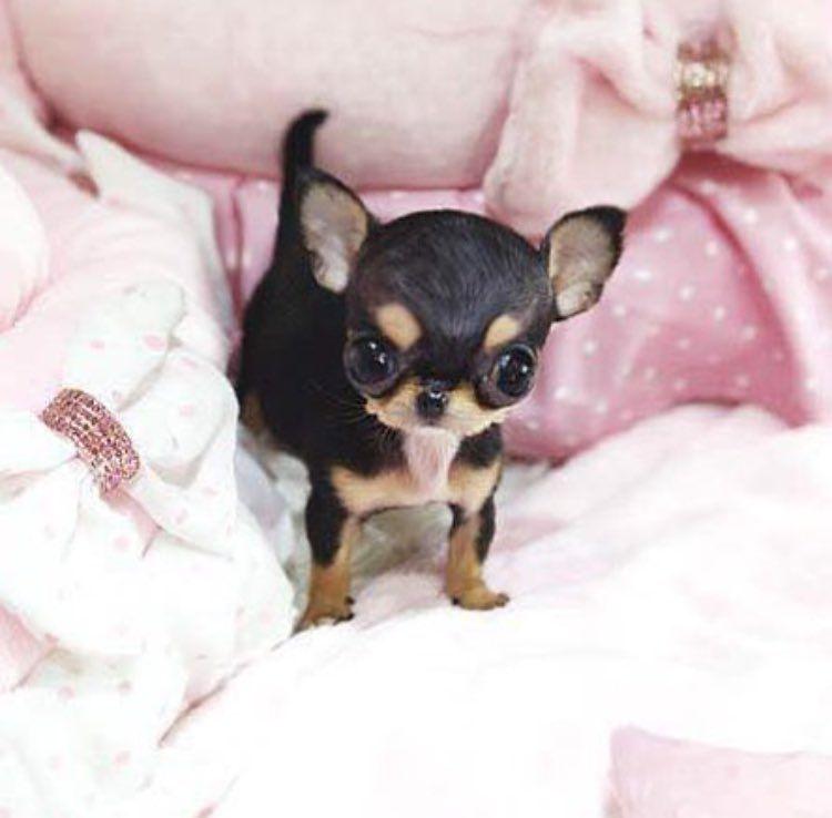Paris Hilton Twitter Needs A New Twitter Name For Mini Me Cute