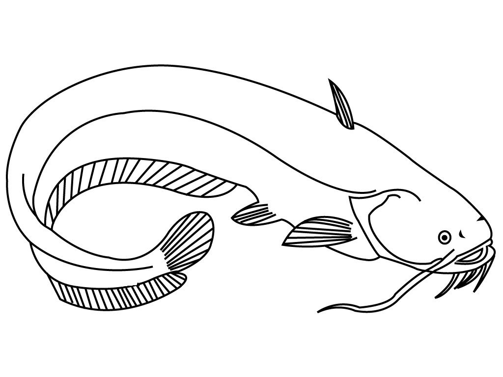 Catfish With Long Mustache Coloring Pages For Kids Cat Printable Fish Coloring Pages For Kids Fish Coloring Page Coloring Pages 3rd Grade Art