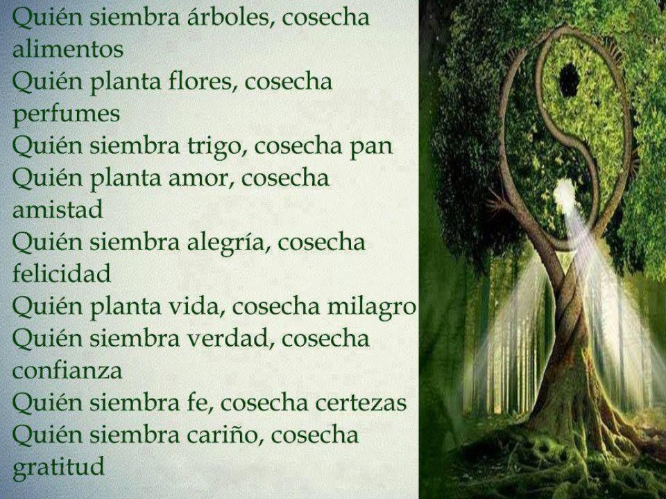 Frases De Motivacion Y Reflexion: Quién Siembre árboles, Cosecha Alimentos... #motivacion