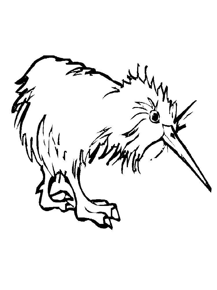 Kiwi Animal Coloring Pages Picture Animal Coloring Pages Coloring Pages Kiwi Animal