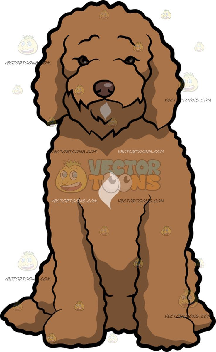 A Lonesome Labradoodle Dog