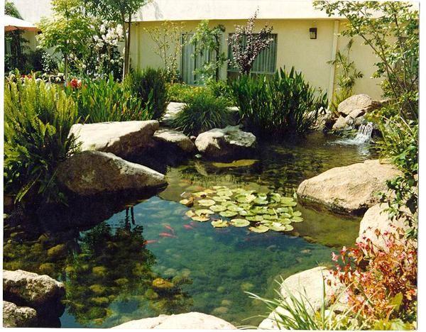 estanque con cascada plantas y peces