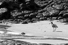 Vogel, Strand, Urlaub