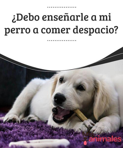 Debo Enseñarle A Mi Perro A Comer Despacio Mis Animales Dogs Dog Nutrition Cat Nutrition