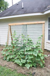 Building A Cheap Garden Trellis Cheap Garden Trellis 400 x 300