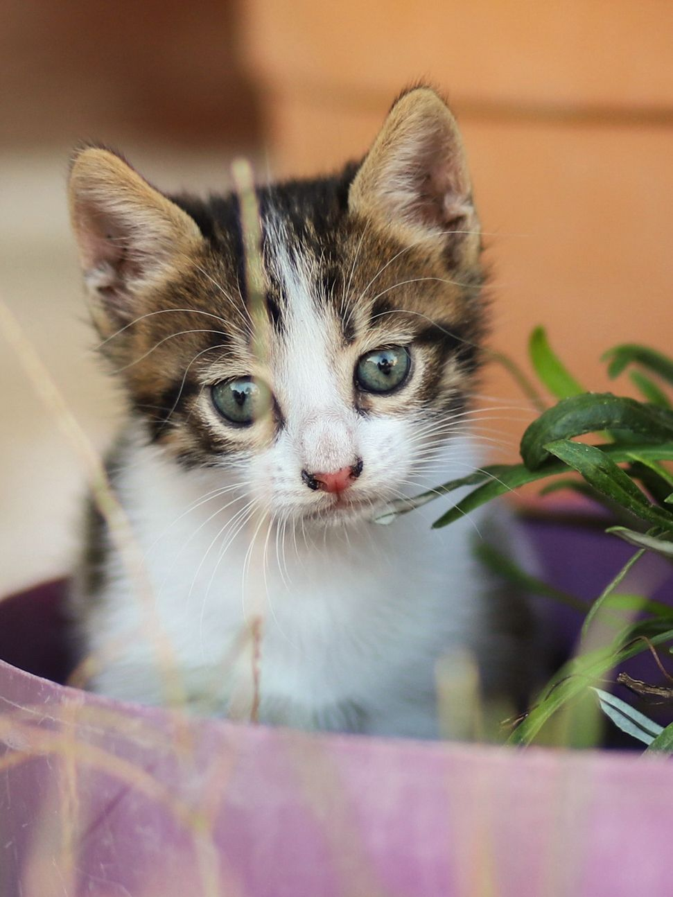 15 Pics Stray Cat Photos Cat Mother Is Nursing In The Street Kittens Cutest Cat Photo Animals Beautiful