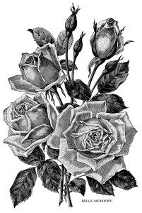 Black And White Flower Pictures Free