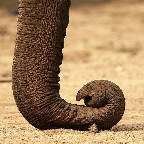 34 Majestic Photos of Elephants
