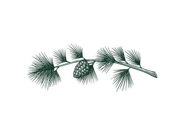 Steven Noble Illustrations Pine Branch Pine Tattoo Tree Branch Tattoo Pine Branch