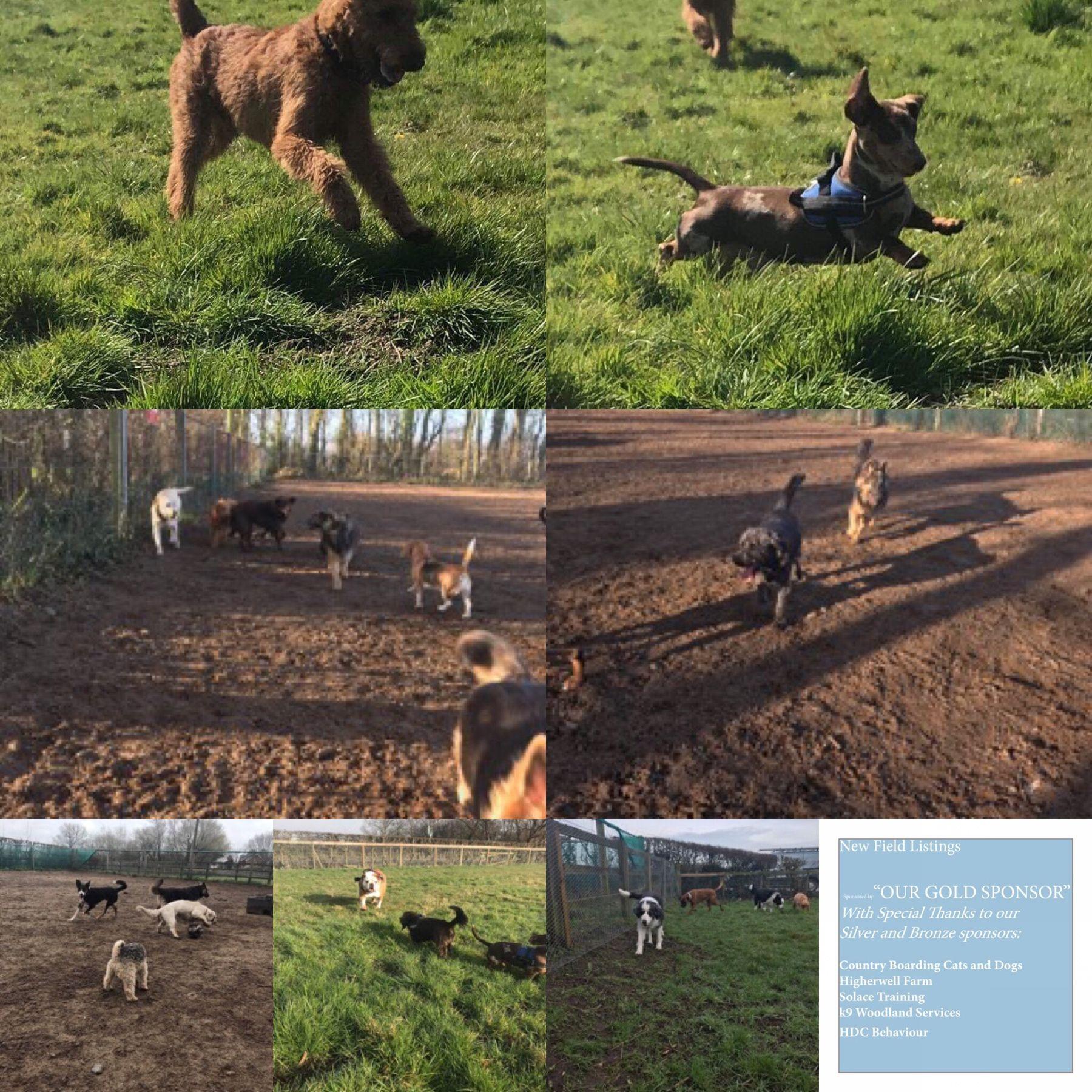 Lytham Dog Field Moss Side Lytham Lancastershire Fy8 4nb 3