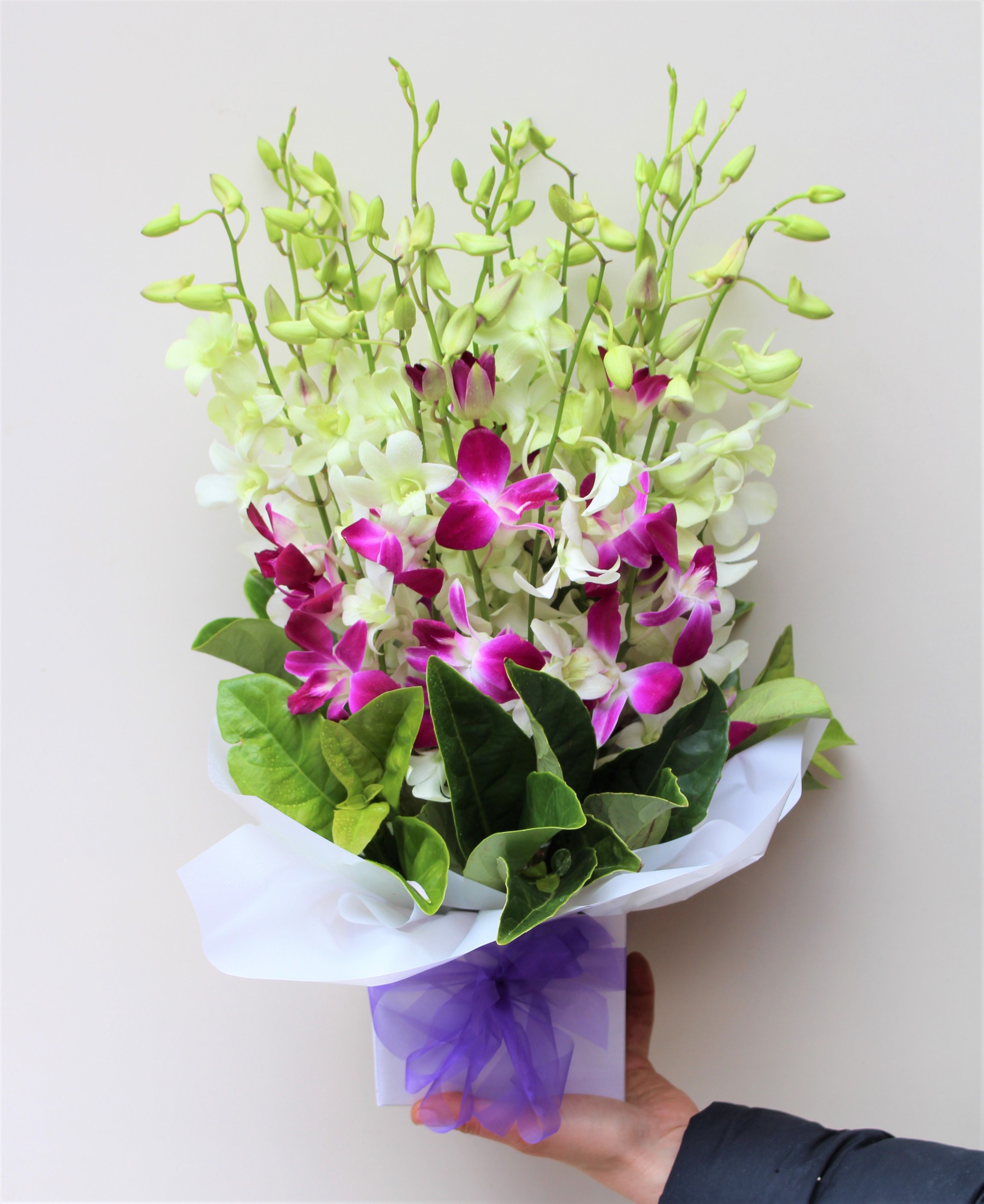 Contemporary Orchids Orchids Cheap Flower Delivery Purple Orchids