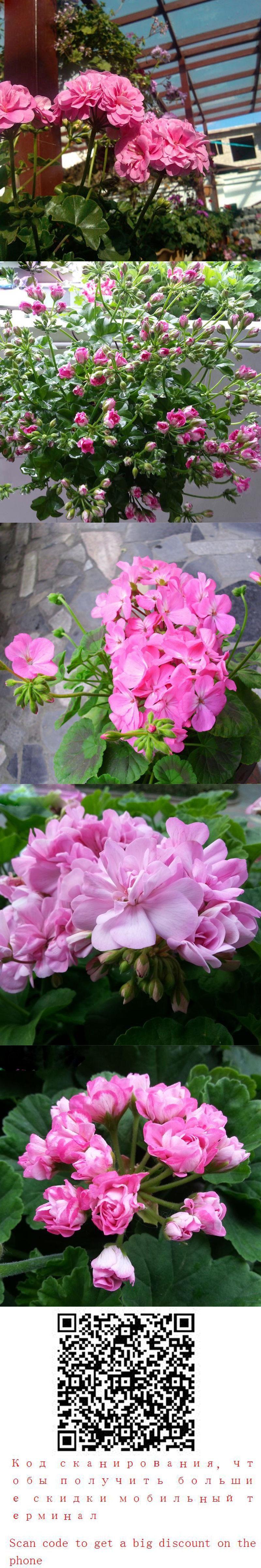 Hot Sale Rare Deep Pink Univalve Geranium Seeds Perennial Flower