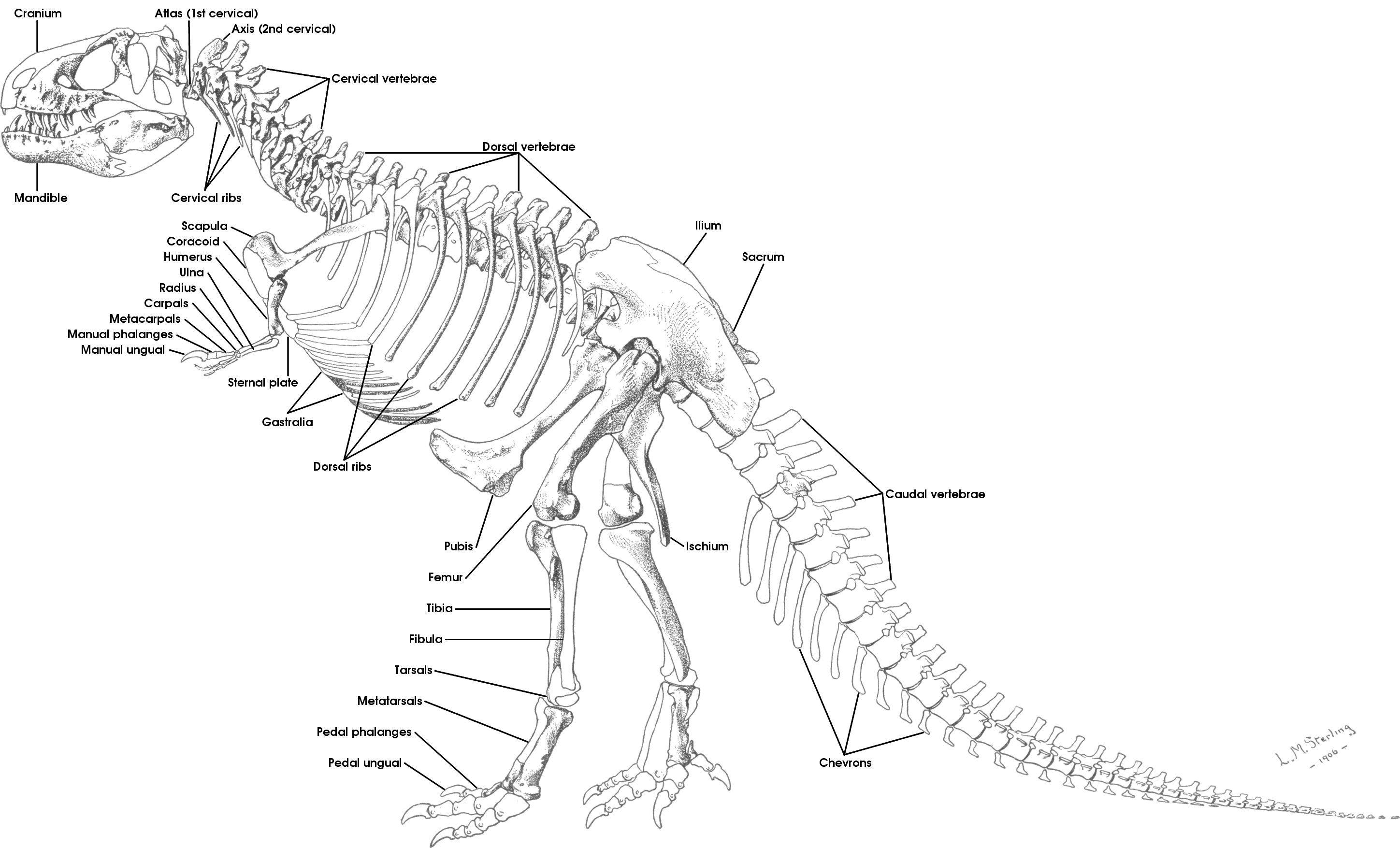 Coloring pages of dinosaur fossils - Fossil Coloring Page