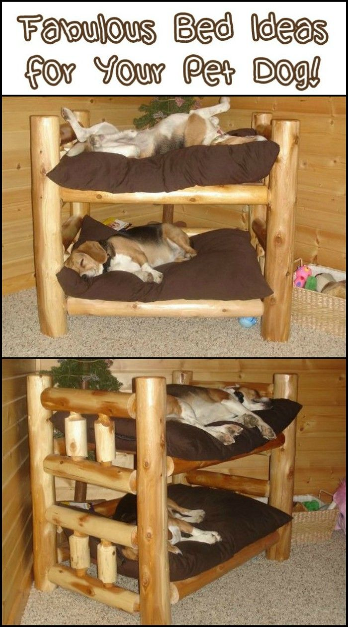 Fabulous Dog Bed Design Ideas Your Pets Will Enjoy is part of Fabulous Dog Bed Design Ideas Your Pets Will Enjoy The - Are you looking for a bed for your best friend  Here are some great bed designs to choose from! How could your furry friend not love these dog bed design  You can build any or all of them yourself  If you're looking to spend less, there are those that are built from salvaged materials such