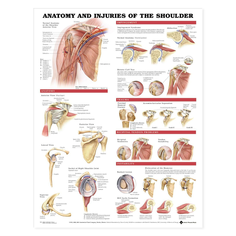 shoulder anatomy diagrams - - Yahoo Image Search Results   PT ...