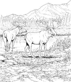 Two Moose Deers Coloring Page From Moose Category Select From 24848 Printable Crafts Of Cartoons Nature Ani Animal Coloring Pages Coloring Pages Animal Book