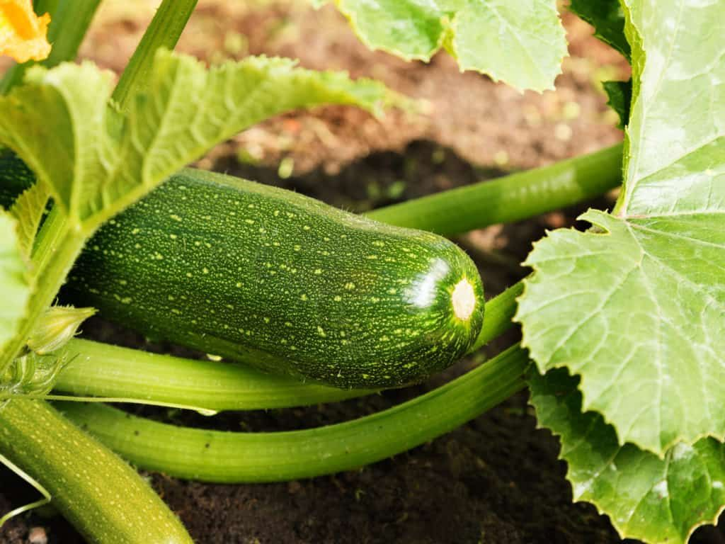 17 Vegetables That You Can Grow In Pots And Containers 400 x 300