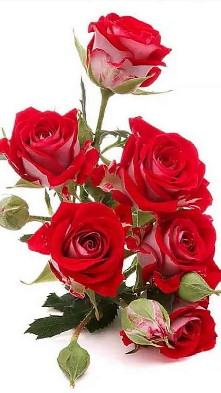 Chin Lai Kuah Google Flowers Bouquet Beautiful Flowers Rose