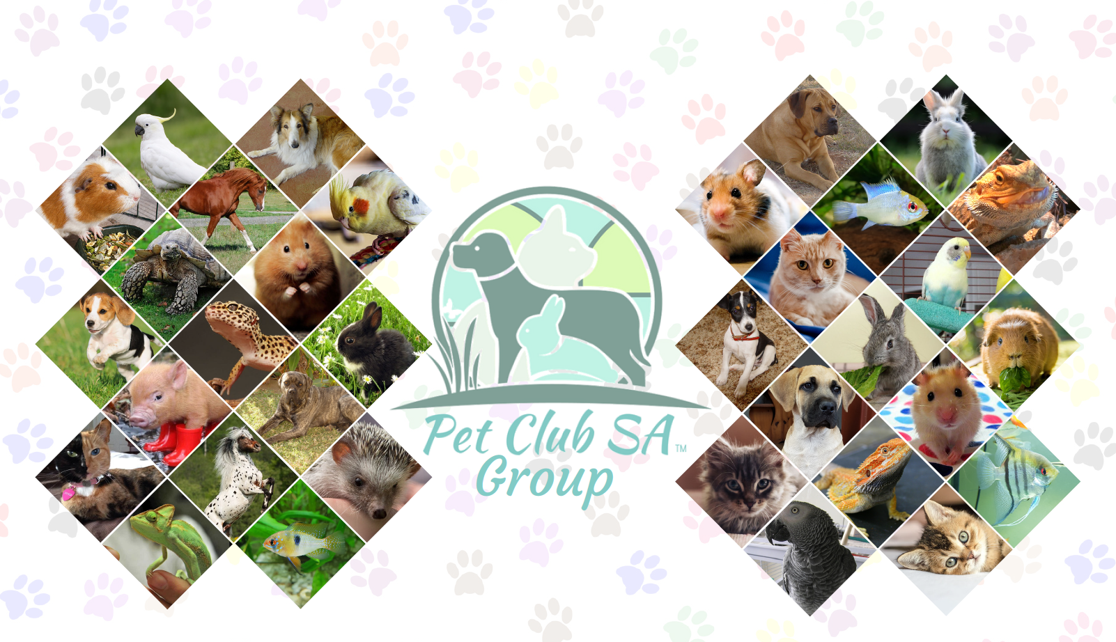 Pin On Pet Club Sa