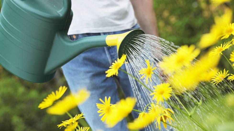 Näin mausteet vaikuttavat tuholaisiin - 5 vinkkiä, joilla kasvimaan saa kukoistamaan