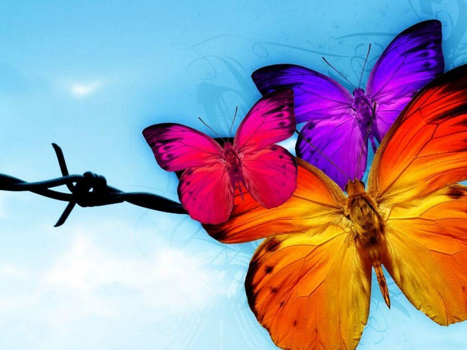 Free butterfly wallpaper, Cute butterfly wallpaper, Colorful ... for Colorful Butterfly Wallpapers  28cpg