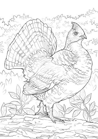Ruffed Grouse Coloring Page From Grouse Category Select From