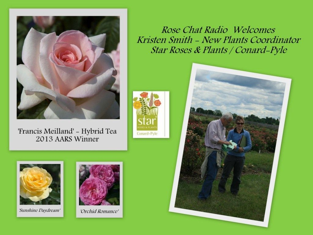 "Celebrating the 2013 AARS Winner ""Francis Meilland"" hybrid tea..  Kristen Smith of Star Roses & Plants Joins Us! #RoseChat Radio"