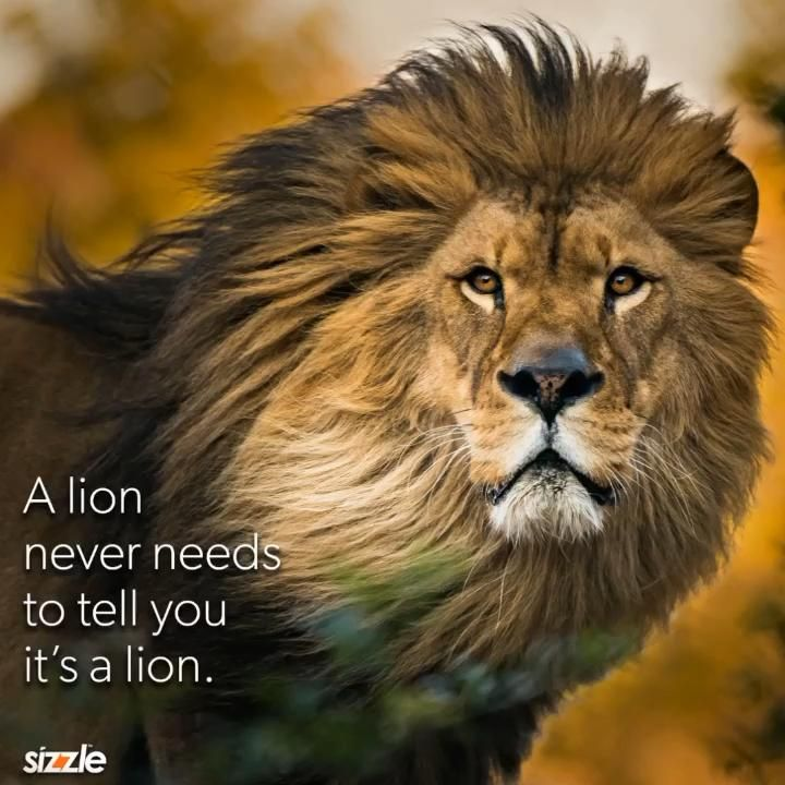 A lion never needs to tell you it's a lion.