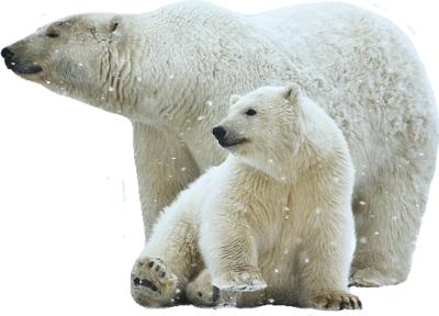 PSD Detail | Polar Bears | Official PSDs