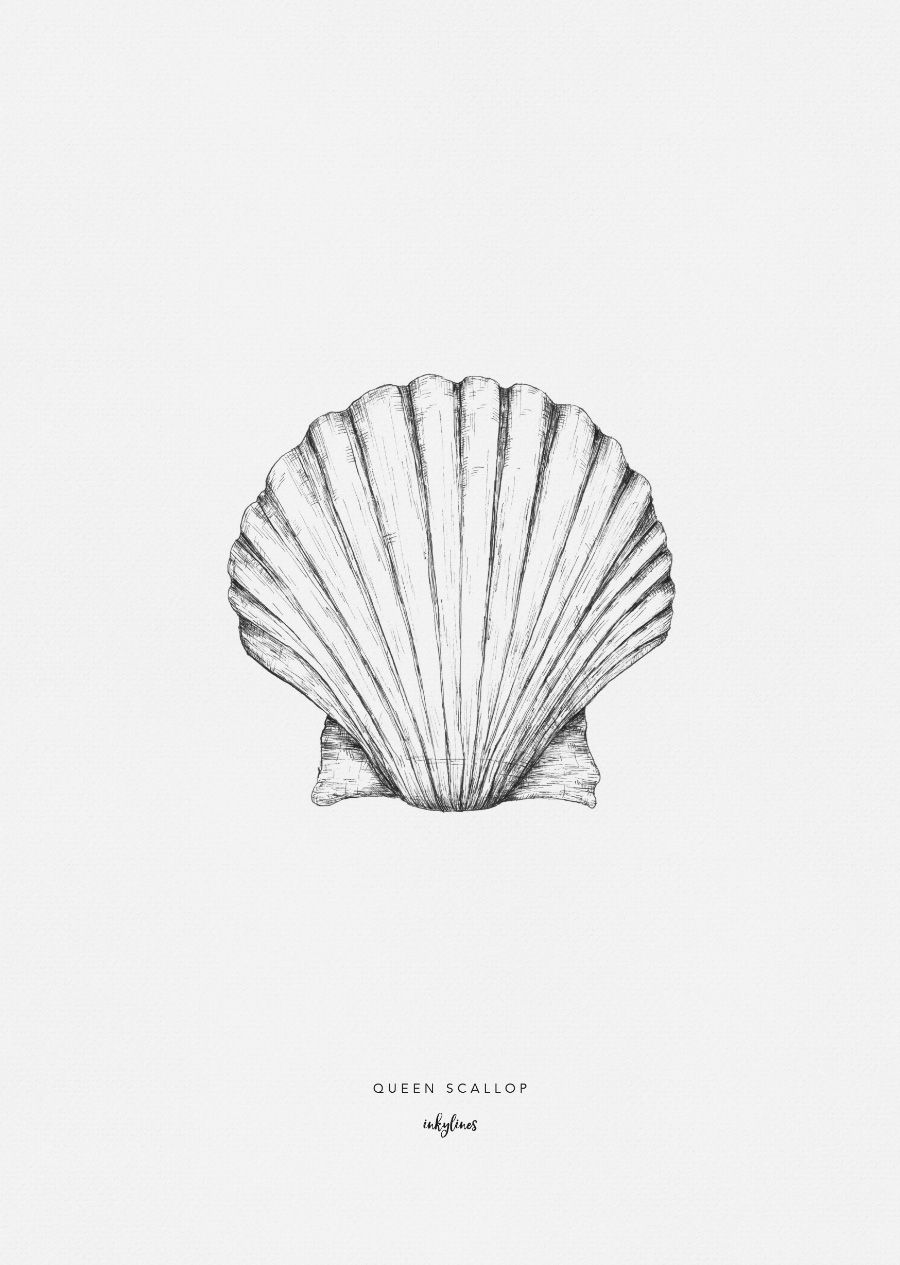 Queen scallop digital prints hand drawn and symbols sea queen scallop biocorpaavc Image collections