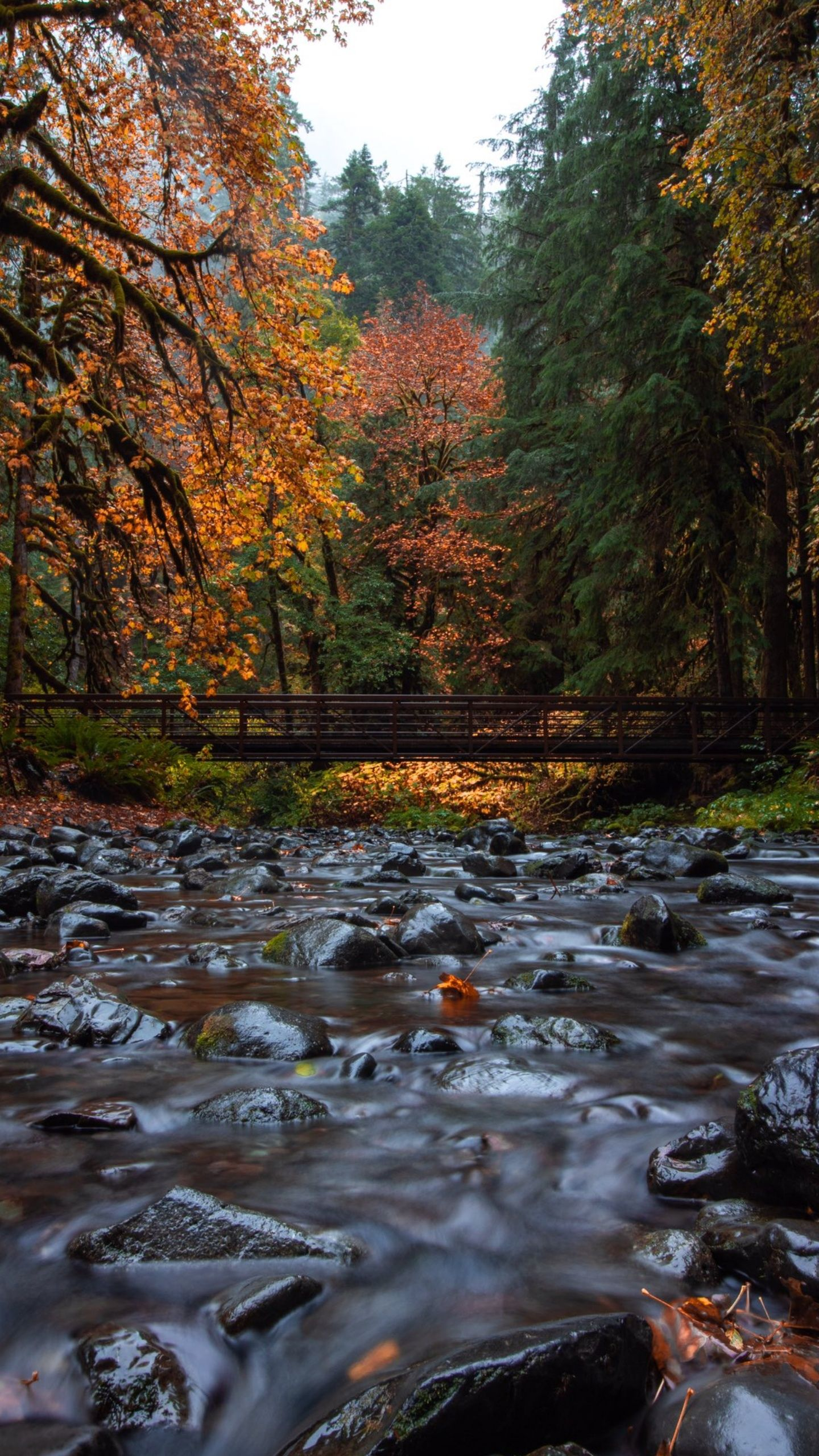 Fall Great Smoky Mountains 1440x2560 Great Smoky Mountains Smoky Mountains Mountain Background
