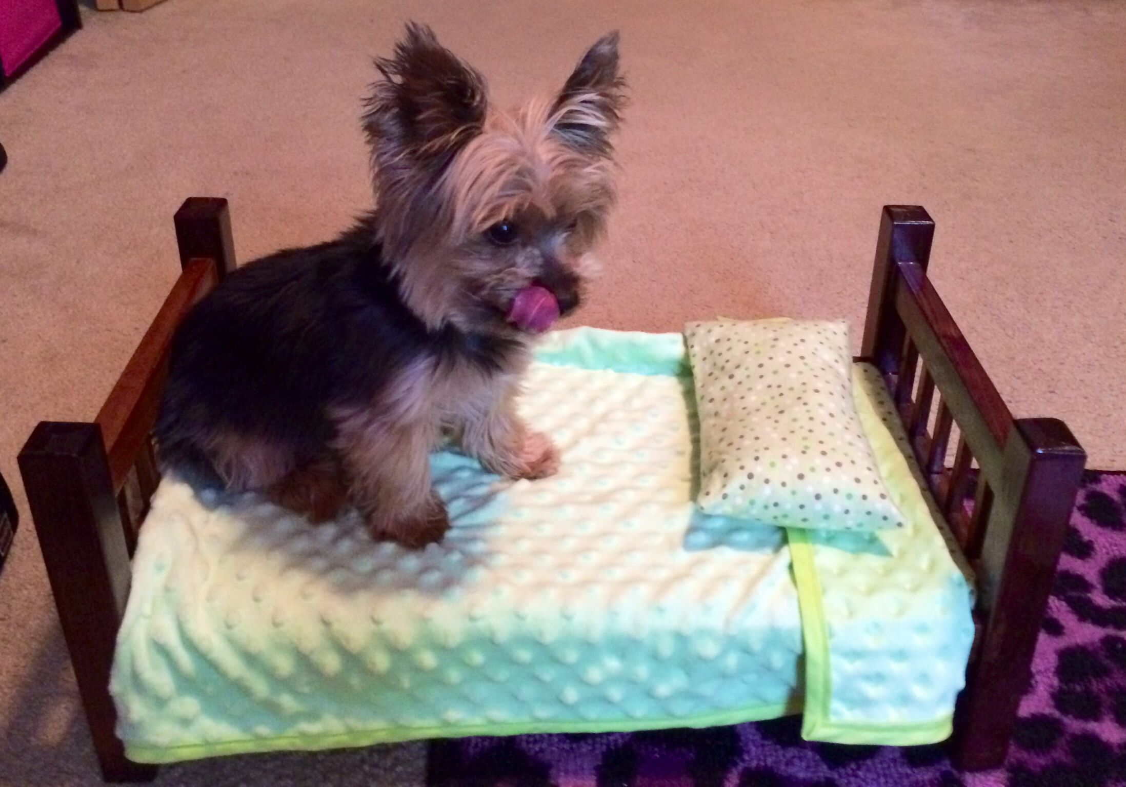 Pin On Yorkies Only