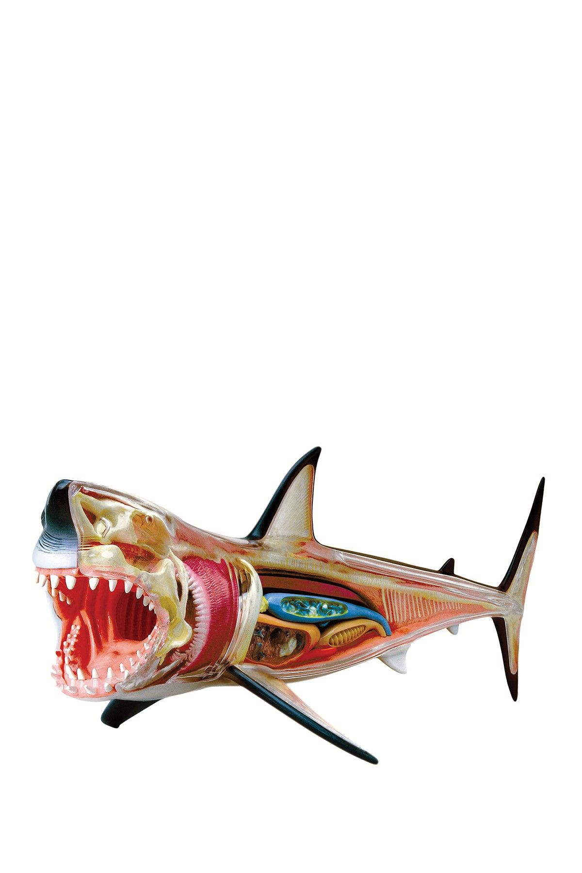 4D Animal Great White Shark Anatomy 20-Piece Set | Shark and Toy