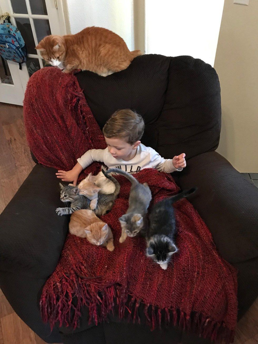2 Year Old Boy Loves Foster Kittens So Much He Becomes Most