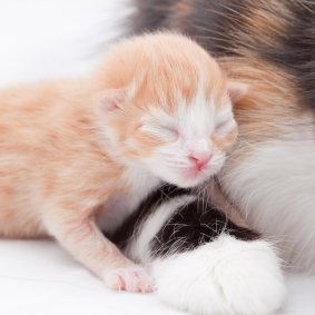 Caring for Newborn Kittens Kitten care, Newborn kittens