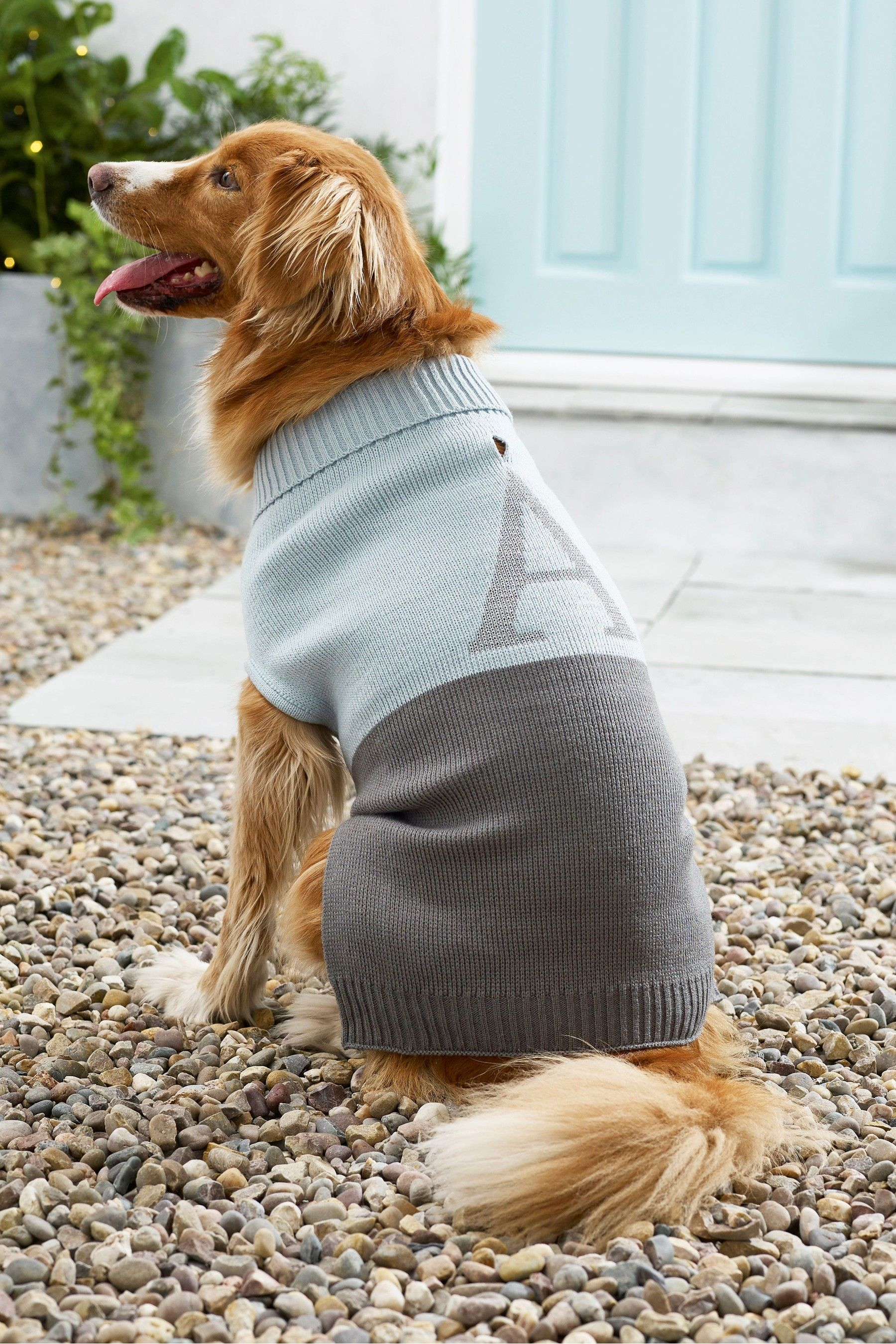 Next Size Small Initial Dog Jumper Blue In 2020 Dog Jumpers Dogs Dog Leads