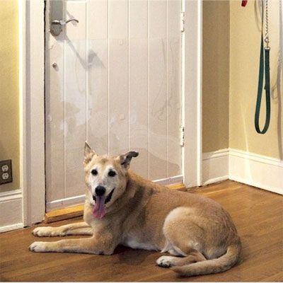 Pet Door Scratch Protector 2 Good To Know Incase Our Future Pooch Is
