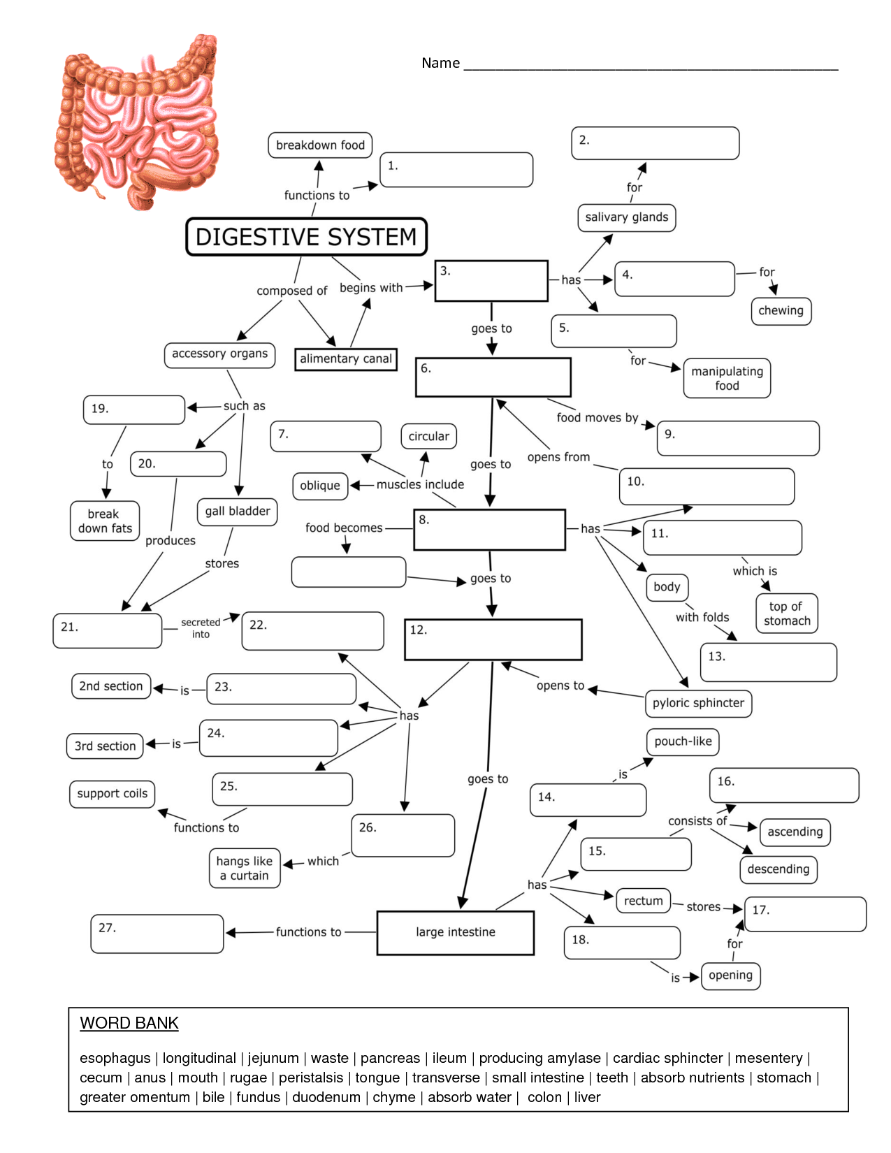 Nervous System Concept Map Biology Corner