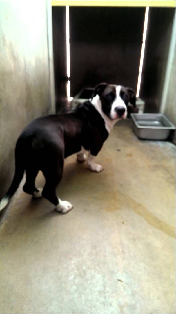 Video0176 Mp4 Please Share This Dog Needs A Safe Loving Forever