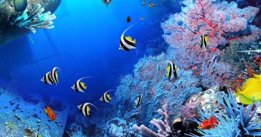 Wow 30 Gambar Pemandangan Indah Di Dalam Laut Kehidupan Dibawah Laut Pemandangan Di Bawah Laut Download Wallpaper Pemandangan Ba Di 2020 Pemandangan Gambar Lautan