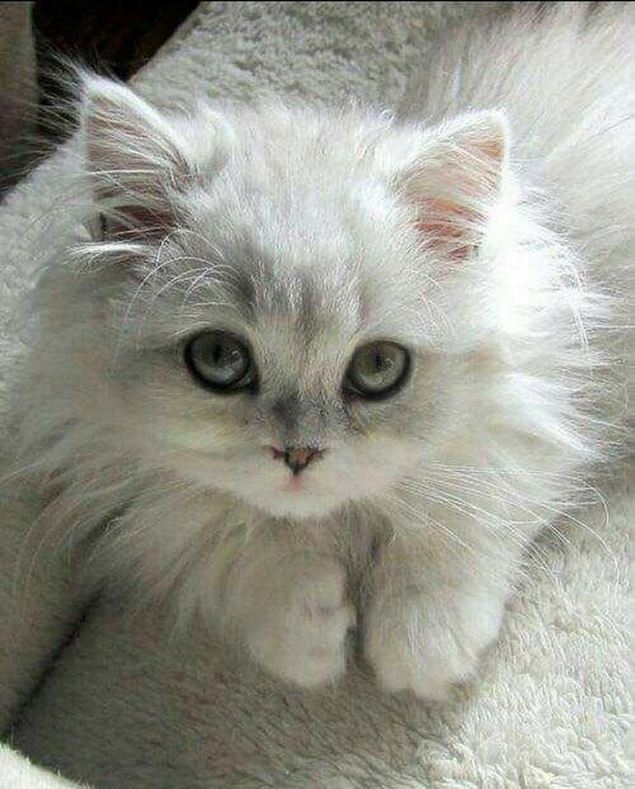 Linn And Jack Google Catsandkittens Cute Animals Kittens Cutest Pretty Cats