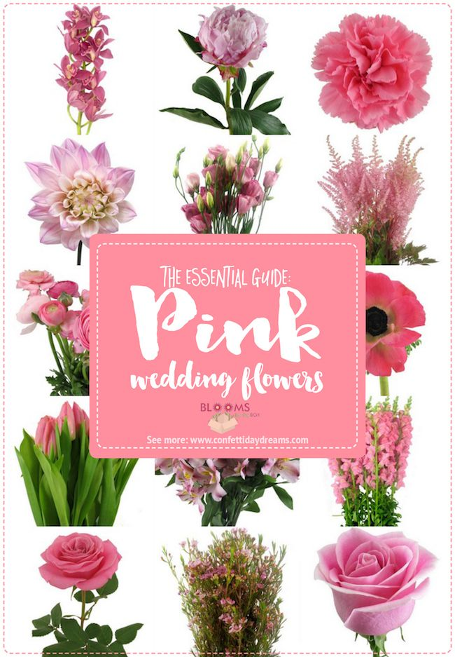 Essential Pink Wedding Flowers Guide Names, Seasons