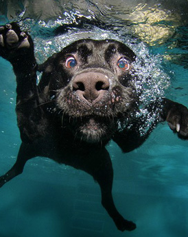 Dive on in, the water is fine!