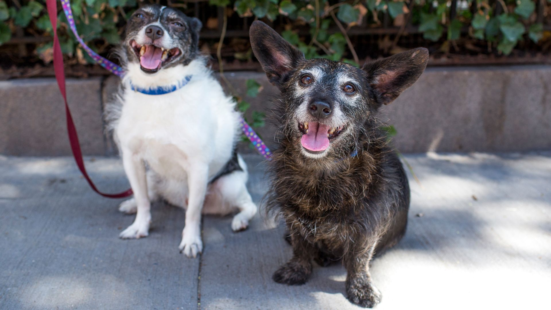 Age is just a number: 7 tips for keeping senior dogs healthy and happy