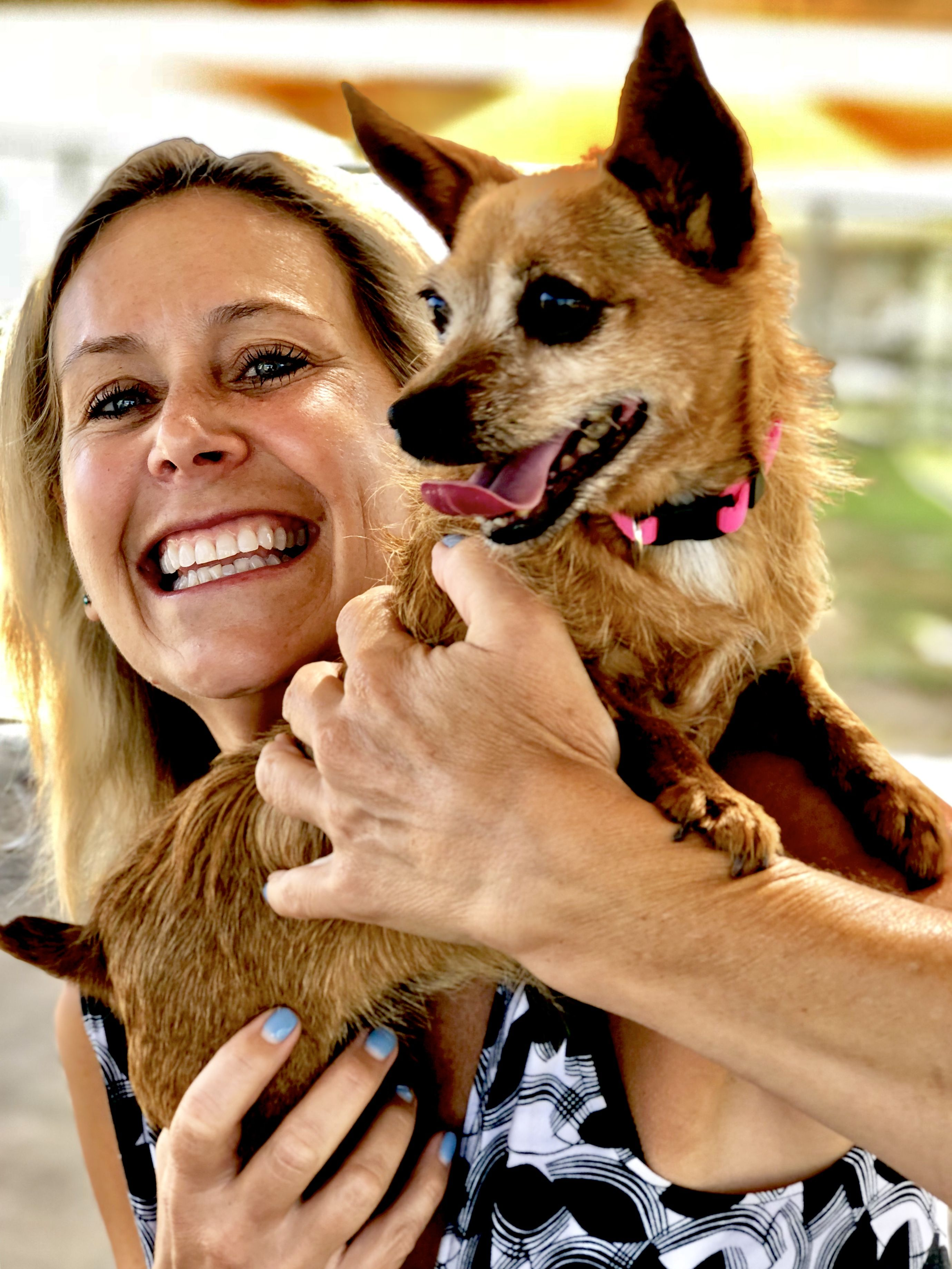 Meet Ginger Our Pet Of The Week At The Camarillo Animal Shelter